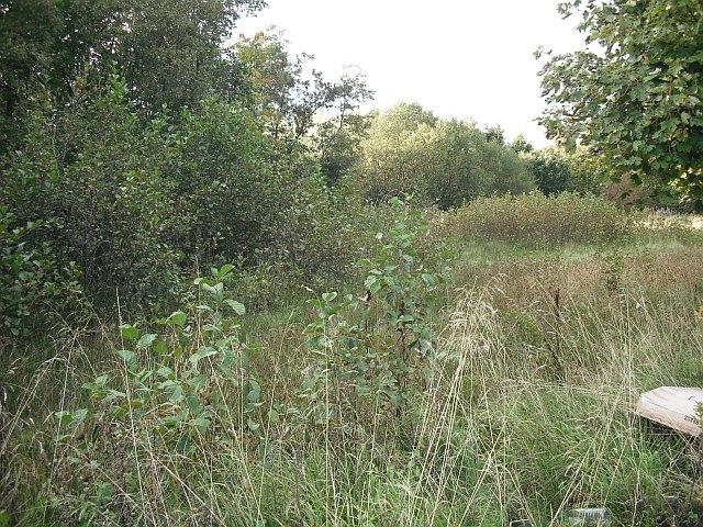 Woodland off Bo'ness Road