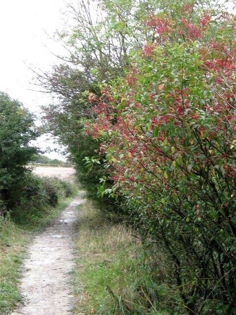 Spindle Tree near Blackcap Hill