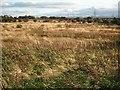 NS7861 : Land awaiting development by Richard Webb