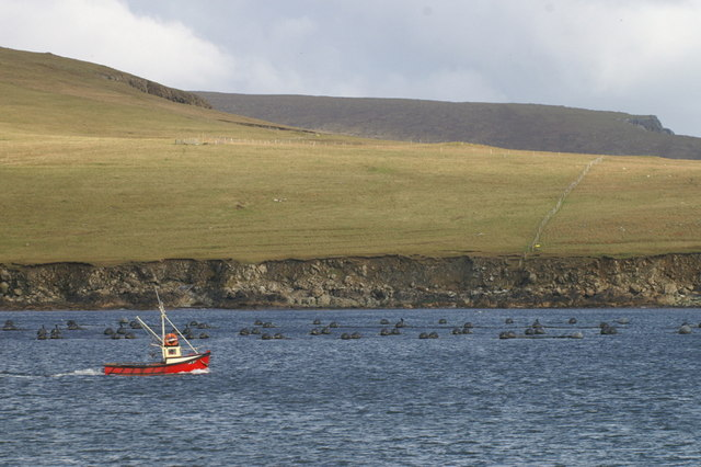 Creel boat leaving the voe at Baltasound