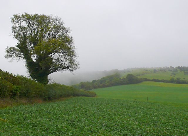 Misty day on Woolland Hill