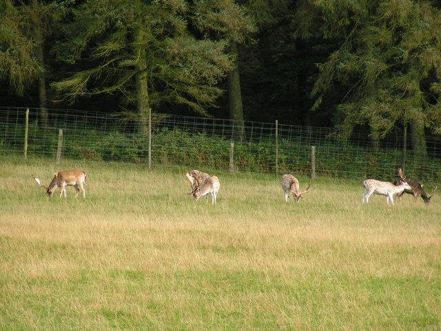 Nature reserve, Wyastone Leas