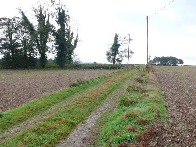 Farm track near Milton Abbas