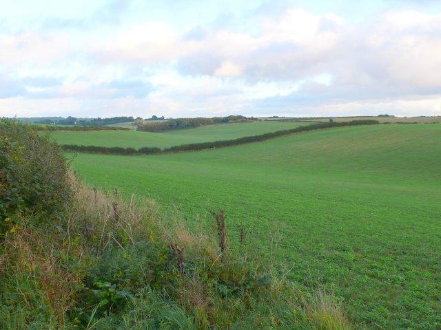 Fields near Chescombe Farm.