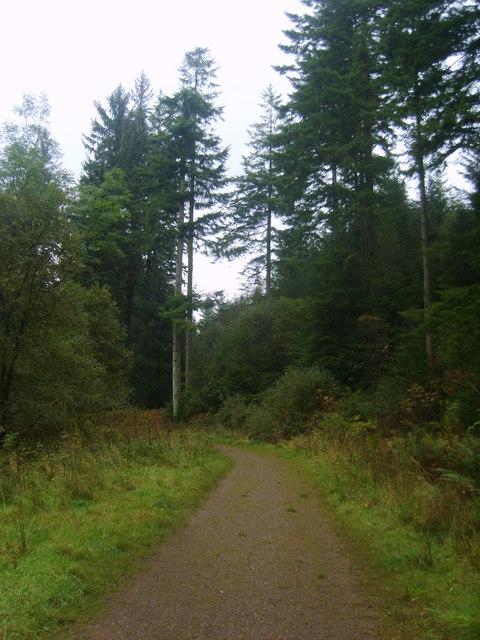 Track, Blengdale Forest