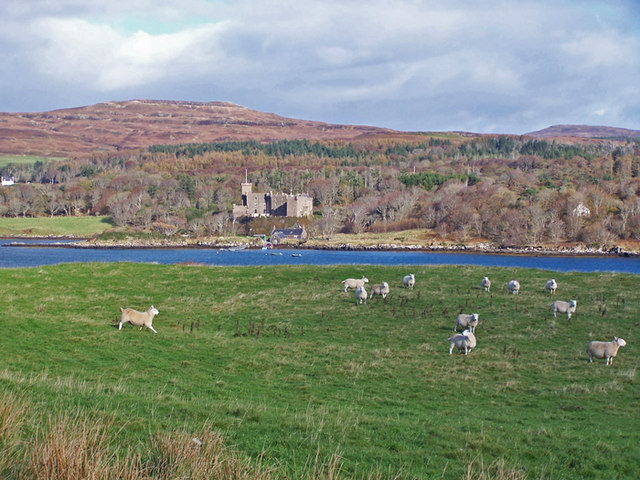 Sheep at Uiginish