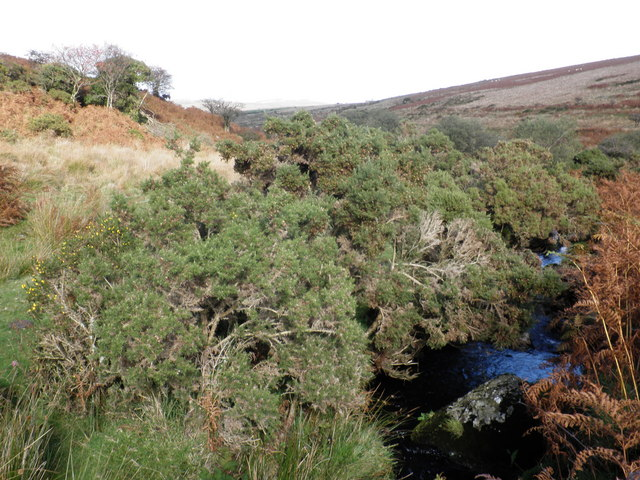 The O Brook, meanders through the gorse, below Skir Hill