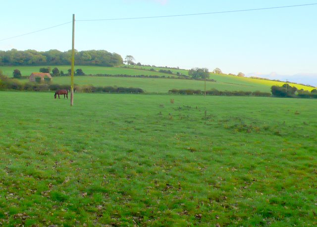 Horse Paddocks at East Farm