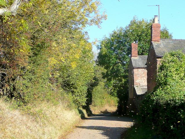 Autumn at Springetts Lane