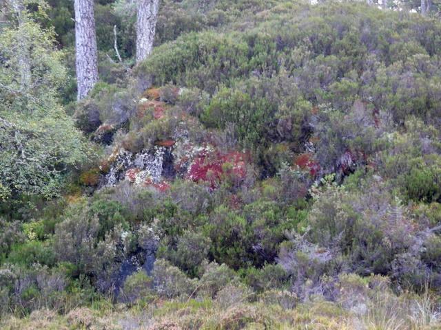 Heathers, mosses and lichens, Glen Strathfarrar.