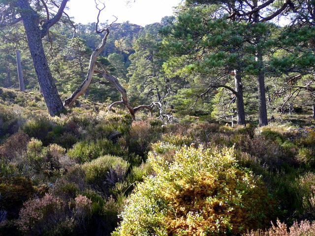 Woodland in Glen Strathfarrar.