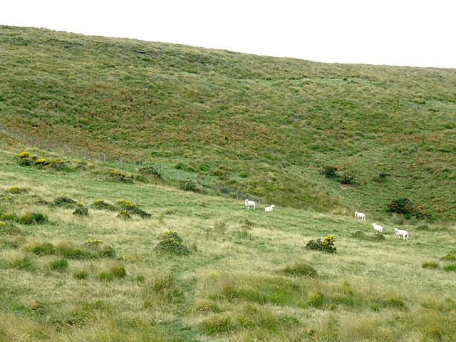 Moorland grazing south of Cefn Fannog, Powys