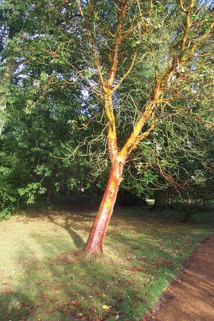 Harris Garden Tree