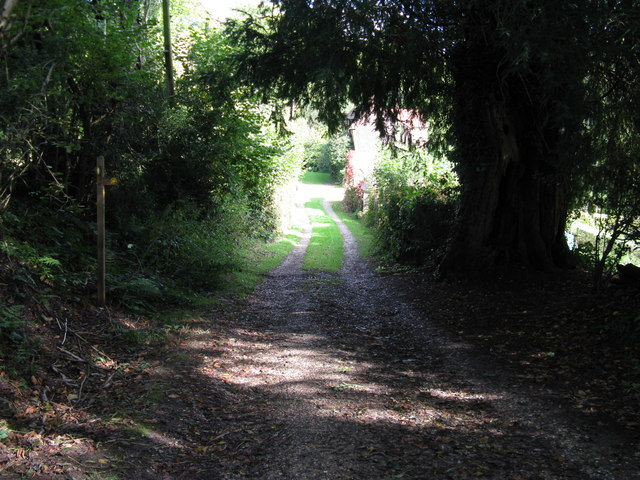 Footpath junction near large Yew tree