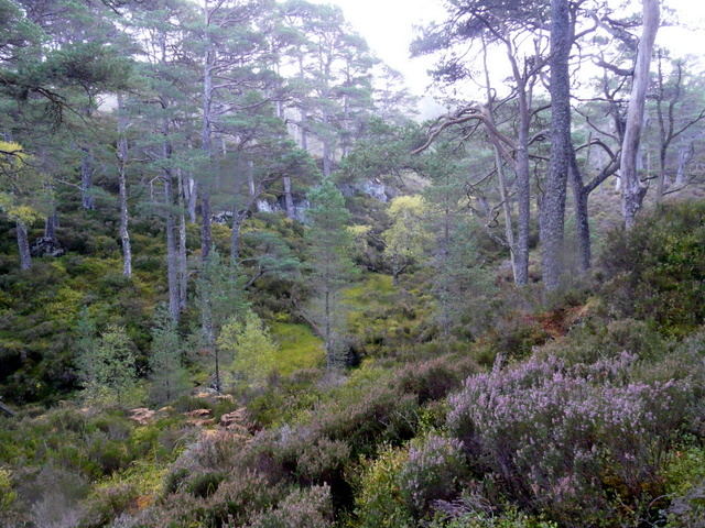 Woodland, Glen Strathfarrar.