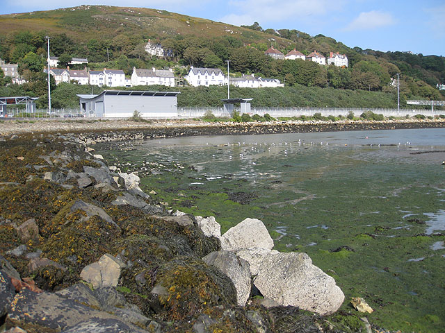 Tide out, birds in, Fishguard harbour
