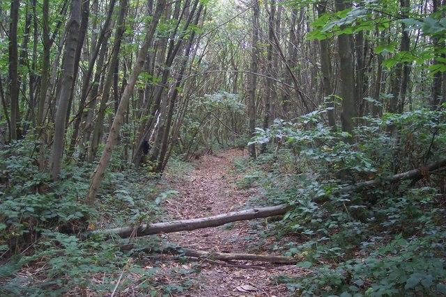 Footpath in Silcocks Wood