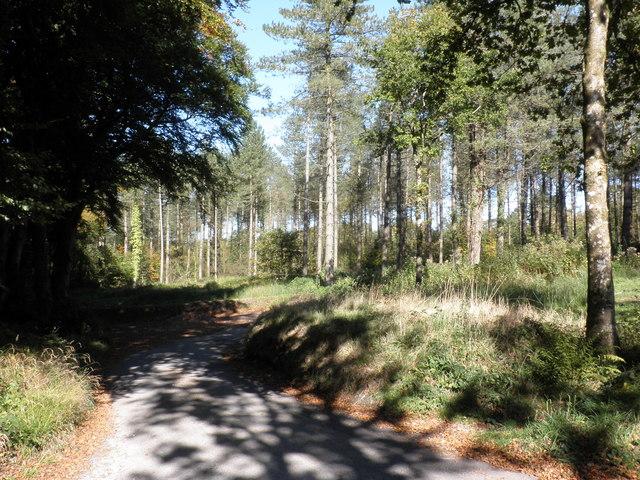 Minor road, on Ideford Common