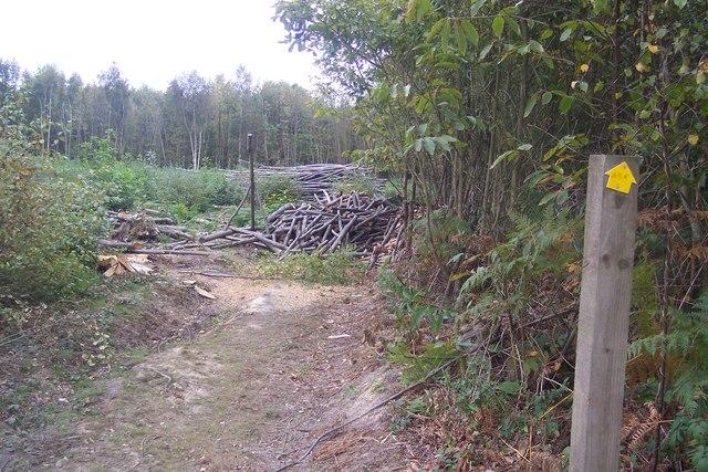 Blocked footpath in Silcocks Wood