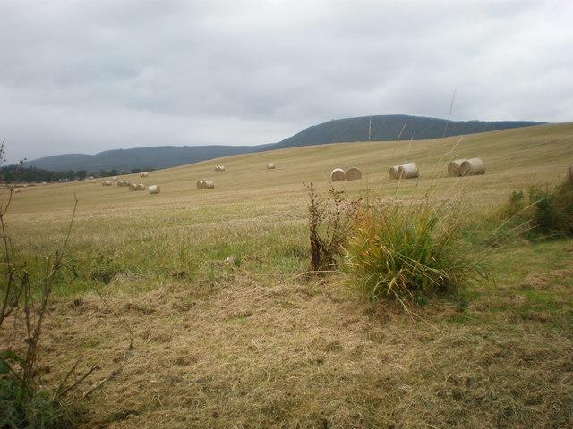 Harvested field beside B817 near Alness