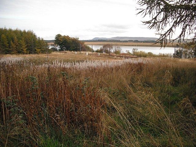 Unplanted area, Cobbinshaw