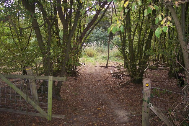 Footpath through Barnfield Wood