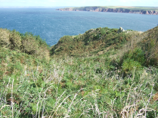 Scrubby valley between the coast path and the sea