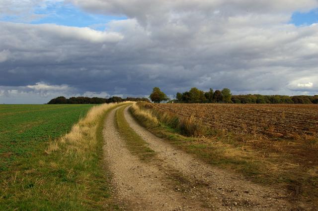 Track towards Pickendale Plantation