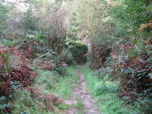 Bridleway through Long Wood