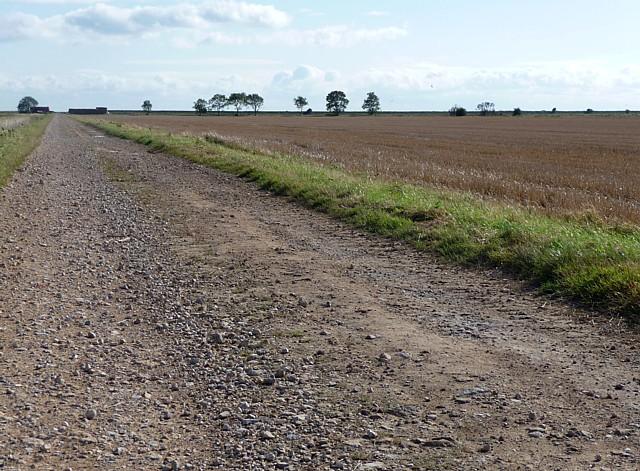 Farmland at Friskney Marsh (1)