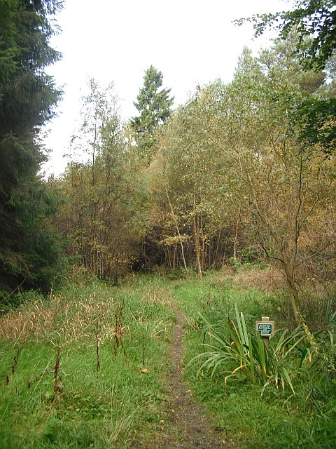 Cycle path, Lanton Muir