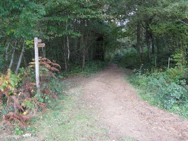 Waymarker at the SE edge of Birchgrove Wood