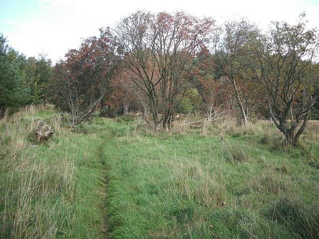 Old drove road, Lanton Hill
