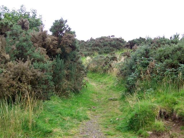 Cateran Trail near Bamff