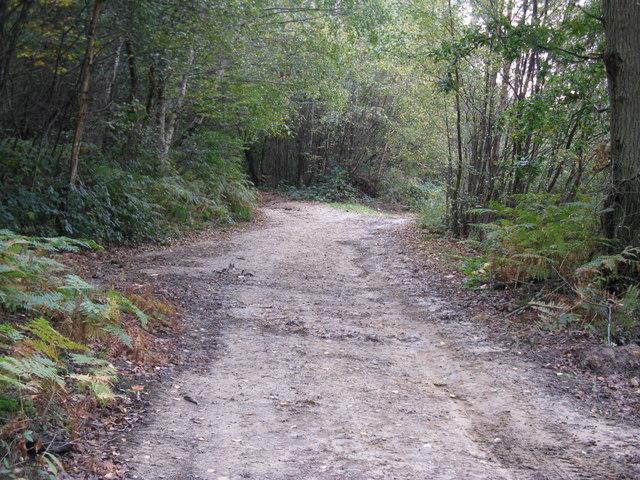 Bridleway crossing woodland track in Birchgrove Wood
