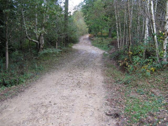 Birchgrove Wood
