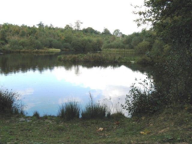 Fishing pond in Birchgrove Wood