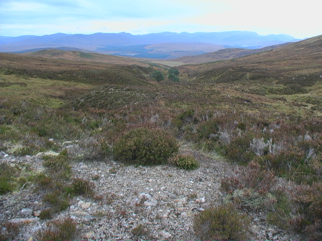 The first trees on the Allt Glas Choire
