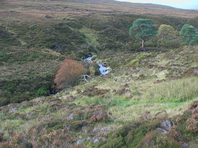 The last trees in the glen east of Garbh Meall