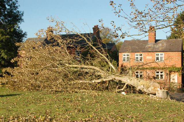 Felled tree at The Green, Broadwell