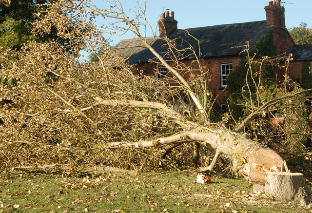 Close-up of felled tree at The Green, Broadwell