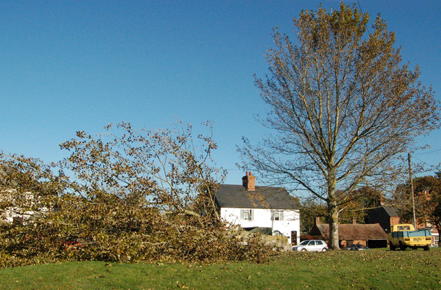 One up, one down: felled tree at The Green, Broadwell