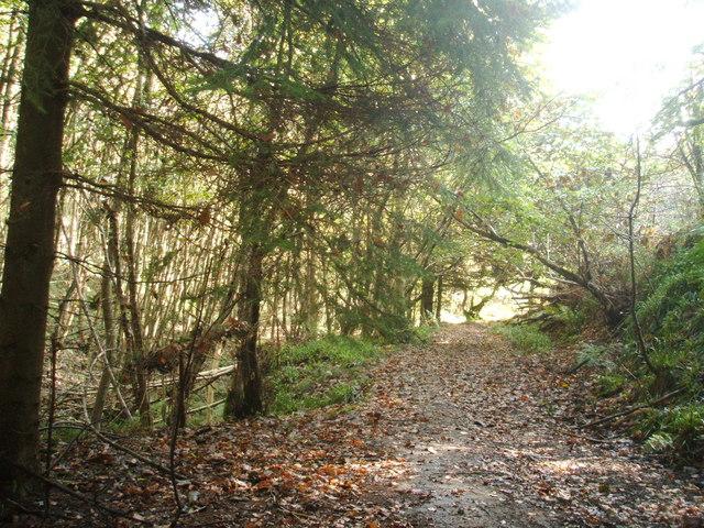 Path through Clough Wood