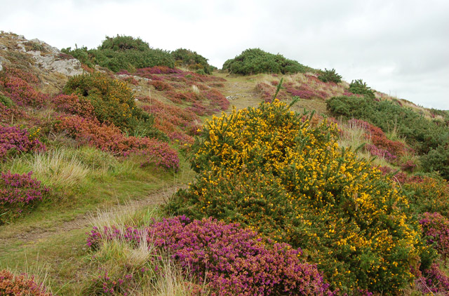 Circular walk from Solva to St Elvis and Dinas Fawr (4)