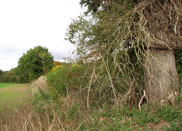 Hedgerow field boundary