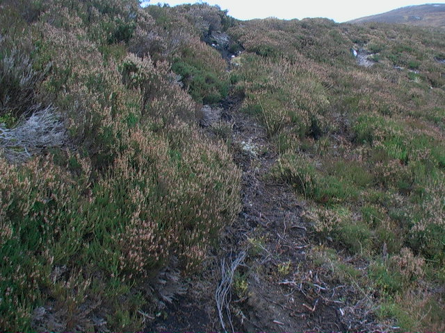 Deer tracks on peat bank east of Garbh Meall