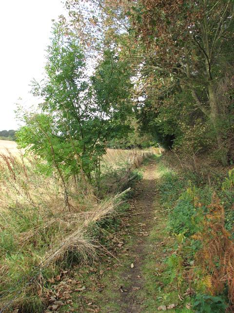 Skirting a woodland's edge