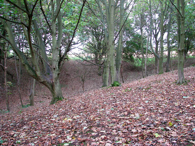 Woodland south of Wood's End