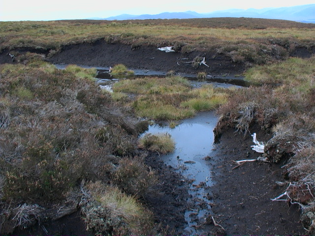 Remains of forest captured in peat banks east of Garbh Meall