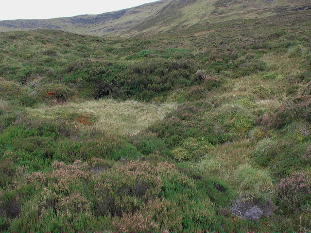 Heathery howff on slopes of Garbh Meall